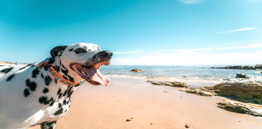 dog on beach summertime safety tips