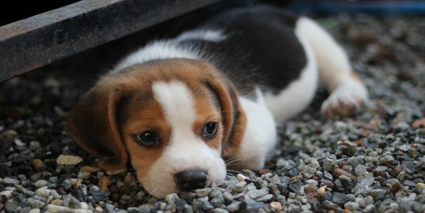 Pexels. Puppy laying on rocks outside