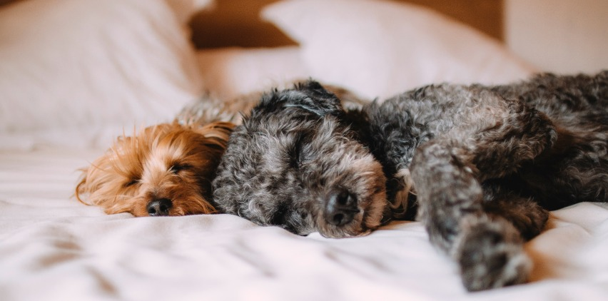 dogs sleeping on bed