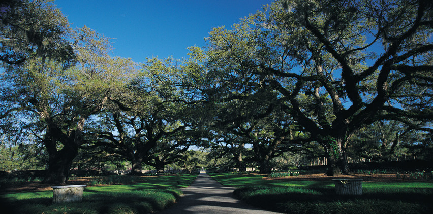 brookgreen gardens trees