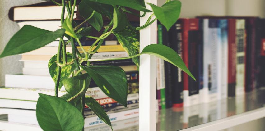 houseplant next to bookshelf with health benefits