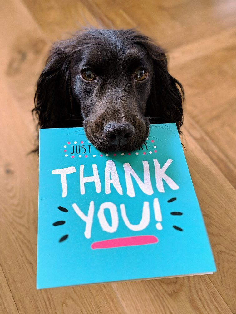 dog holding thank you card