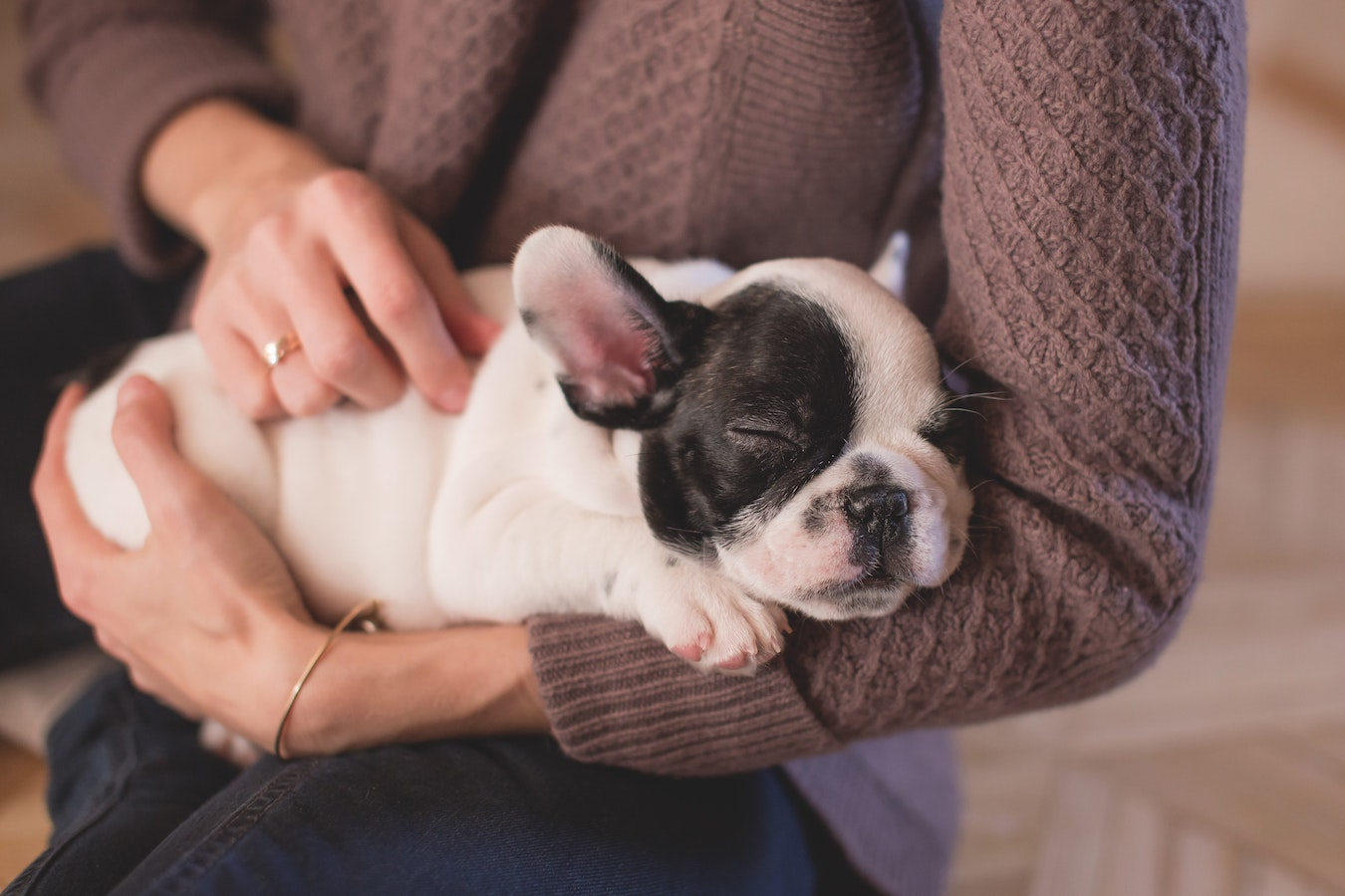 A puppy sleeping in someone's arms